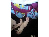 4 gorgeous puppies for sale