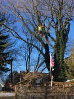 Tree Removal Best prices call 705 294 1314 Steve .