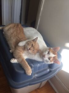 2 male cats- Free