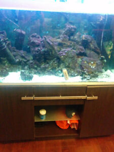 Aquarim fish tank with 3 fish and rocks