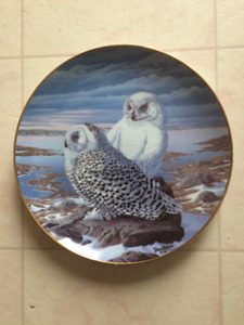 Collector plate Snowy owls