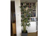 Fake bamboo tree 170cm tall