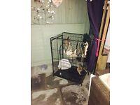 Animal cage £10
