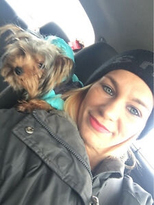 STOLEN & NOW MISSING! TEACUP FEMALE YORKIE