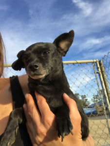 Chico is Looking for His Forever Home!