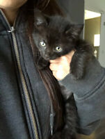 Male kitten looking for his new home