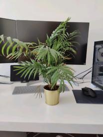 FREE indoor plants giveaway