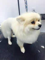 Looking for Employment as a Dog Groomer