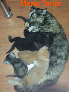 Kittens--litter trained, socialized, gentle