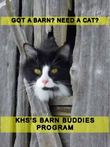 Have a barn? Need a cat? Call us