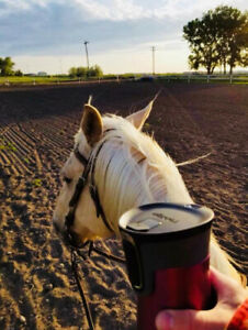 Horse Boarding Facility & Equestrian Events