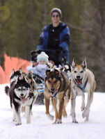 Kennel Help/Dogsled Tour Guide