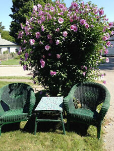 3 Piece Wicker Table & Chairs Set