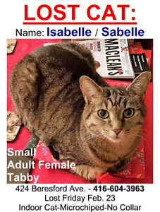 Lost:  Little Brown Tabby (Isabelle)