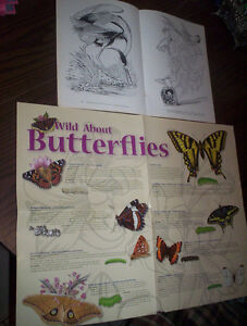 Audubons Birds of America Dover coloring book Butterflies poster