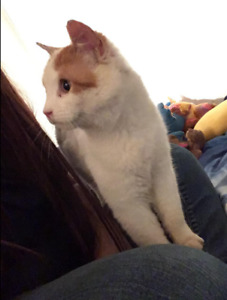 jeune adulte Chat (charly) a donner