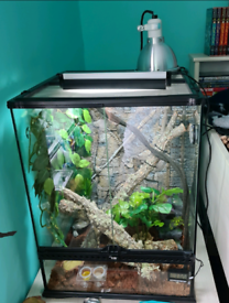 Full Crested Gecko set up with extras
