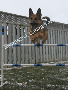 Agility, All levels of Obedience, RallyO and more!!