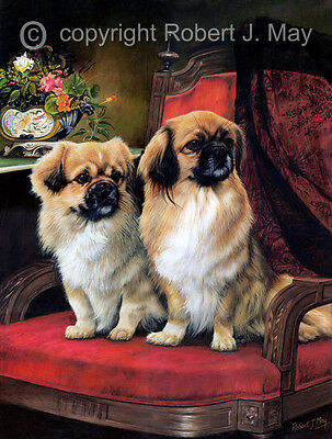 Tibetan Spaniel Limited Edition Print by Robert May