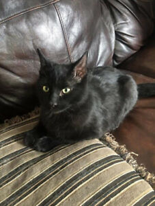 Kitten for a good home in saskatoon or surrounding areas