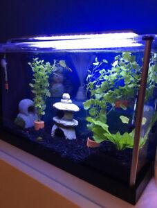FISH TANK/AQUARIUM FOR SALE PLUS ACCESSORIES