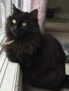 OVLP please keep an eye out for missing black cat #Kanata