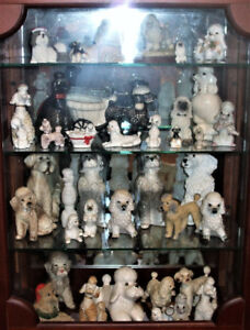 poodle collection for sale