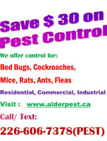 Pest Control Services- Stradford