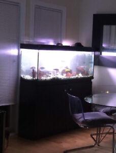 Aquarium 60 gallon