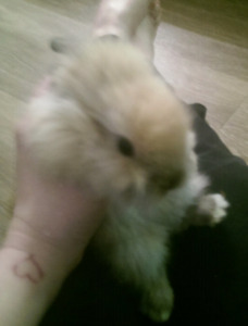3 baby bunnies for sale