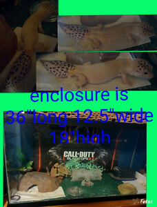 Leopard geckos>located in Shelburne County!!