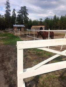 pension extérieur pour chevaux 1er mois gratuit