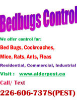 Pest Control Services- St.Catharines and Niagara Falls