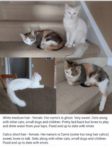 Fosters looking for their forever home