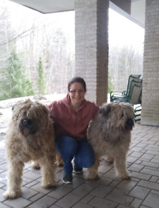 Dog grooming mississauga kijiji in ontario buy sell save dog grooming special solutioingenieria Gallery