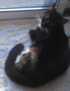 Missing Black/White Cat-pregnant