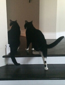 2 Beautiful Male Cats Looking for a Great Home