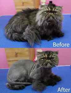 CAT GROOMING available London Ontario image 2