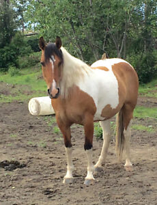 Well-built and responsive mare