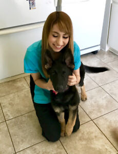 RVT Pet Sitter (and more) Available!