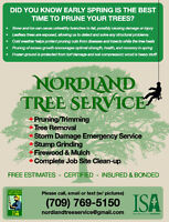 TREE REMOVAL & PRUNING SERVICE