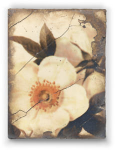 Sid Dickens Retired Memory Block Tile No:  T114 Wild Rose