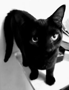 Adopt a Black Cat, Just in Time for Halloween!