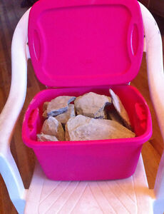 DIG YOUR OWN FOSSILS - BIN OF TRILOBITE CLAY -GUARANTEED RESULTS