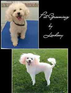 Professional Dog and Cat Grooming Cambridge Kitchener Area image 4