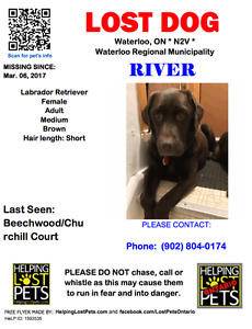 RIVER THE CHOCOLATE LAB IS MISSING