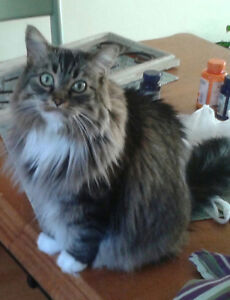 REWARD***LOST CAT NORTHWOOD*****
