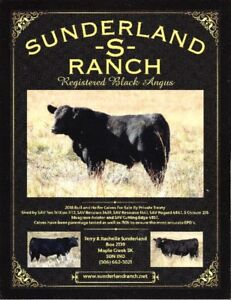 2018 Purebred Black Angus Bulls For Sale By Private Treaty