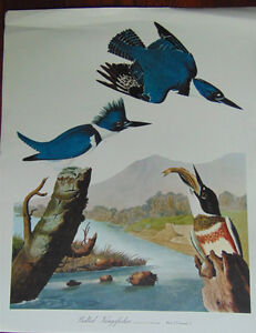 John J Audubon,prints ,Ready to be Framed London Ontario image 9