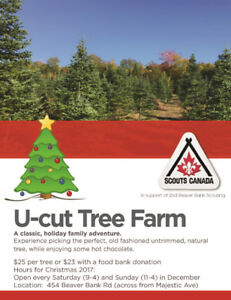 U Cut Christmas Trees - Scouting